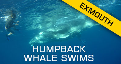 Click here to find out about our HumpBack Whale Swims