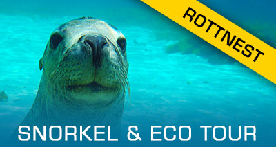 Click here to find out about our Rottnest tours