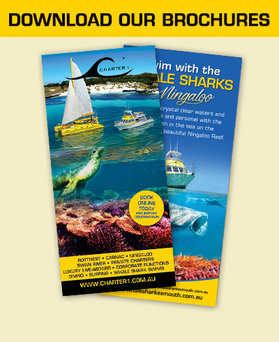Click here to download our brochures