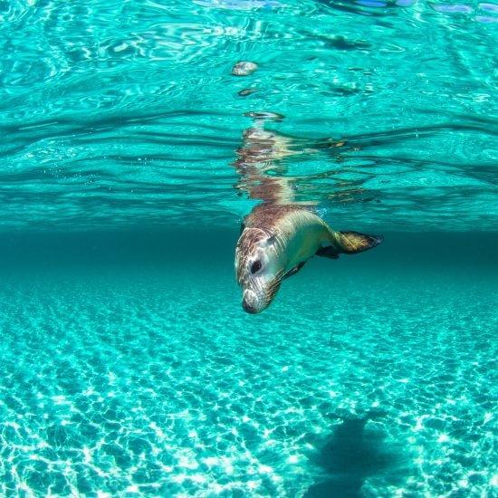 carnac island seal tour